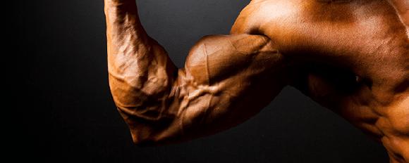 Vrcholek bicepsu