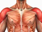 Ramenní svaly