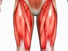 Stehenní svaly