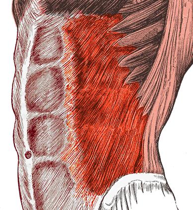 Vnější šikmý sval břišní