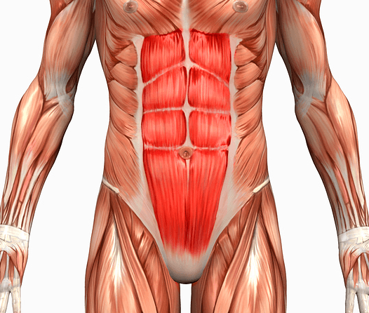 Přímý sval břišní