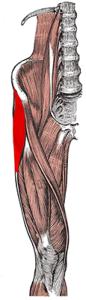 Napínač povázky stehenní