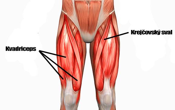Kvadriceps a krejčovský sval