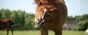 stupid-horse