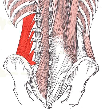 Čtyřhranný sval bederní