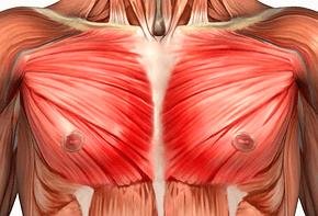 Velký sval prsní
