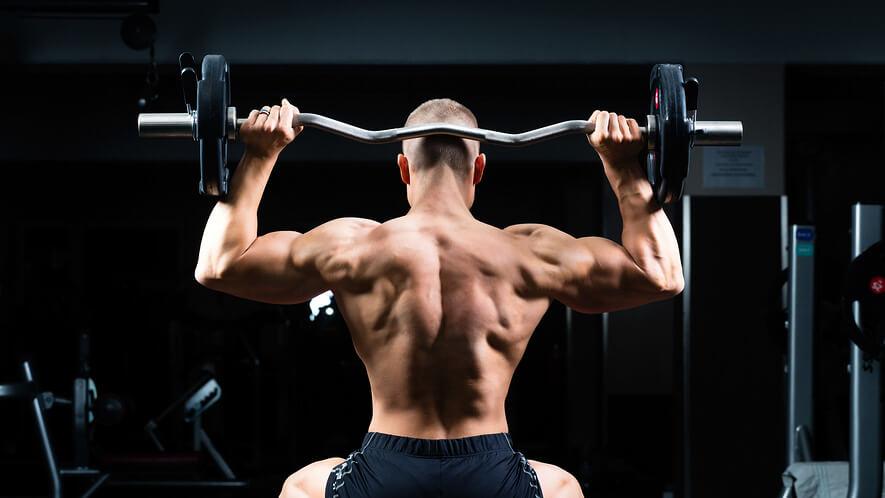 Popis a funkce zádových svalů
